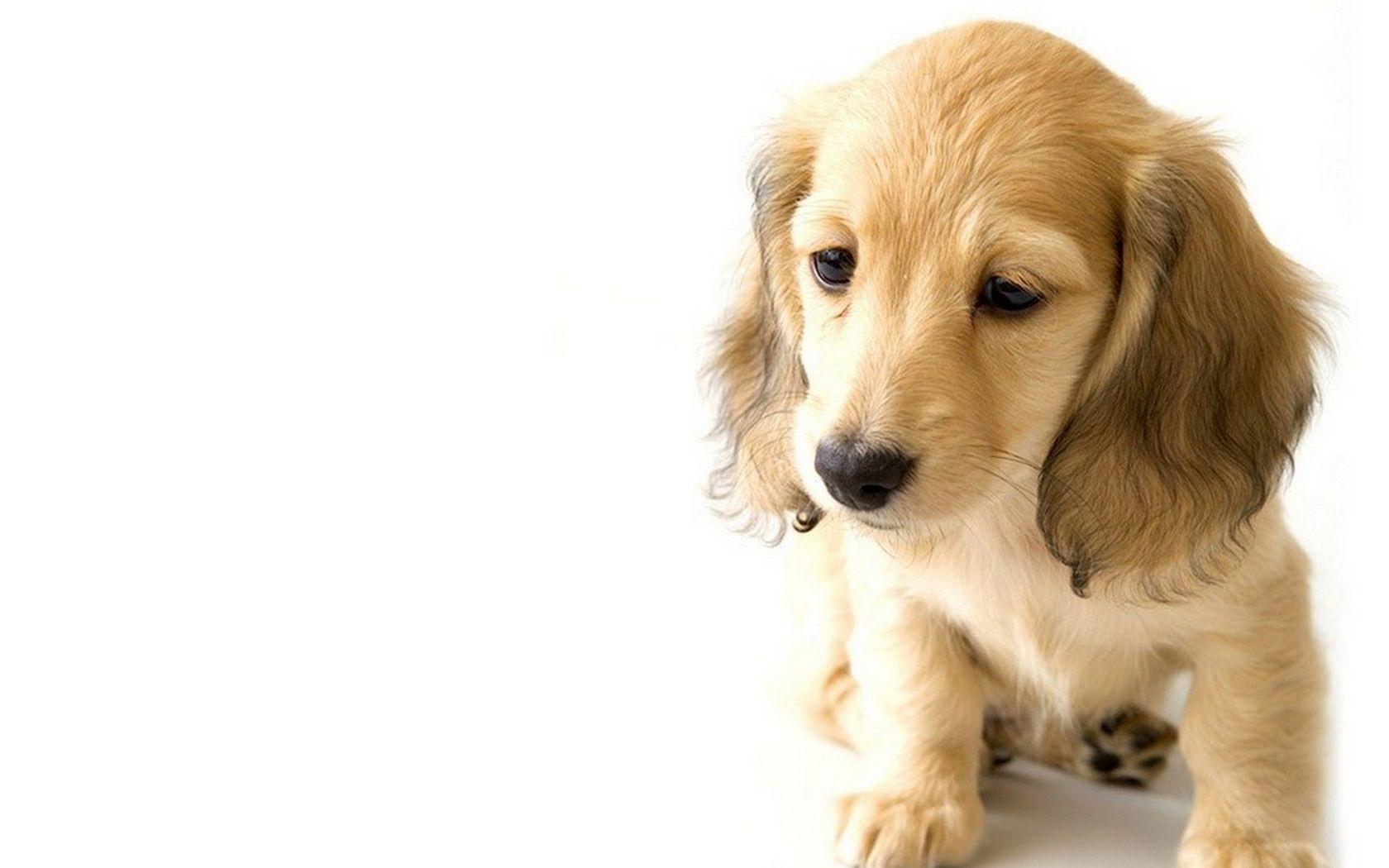 perros wallpaper - Buscar con Google | Fondos De Pantalla | Pinterest