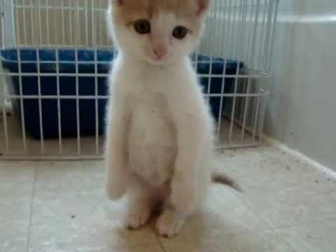 I Are Meerkat Cute Kitten Youtube Kittens Cutest Cute Animal Pictures Kittens