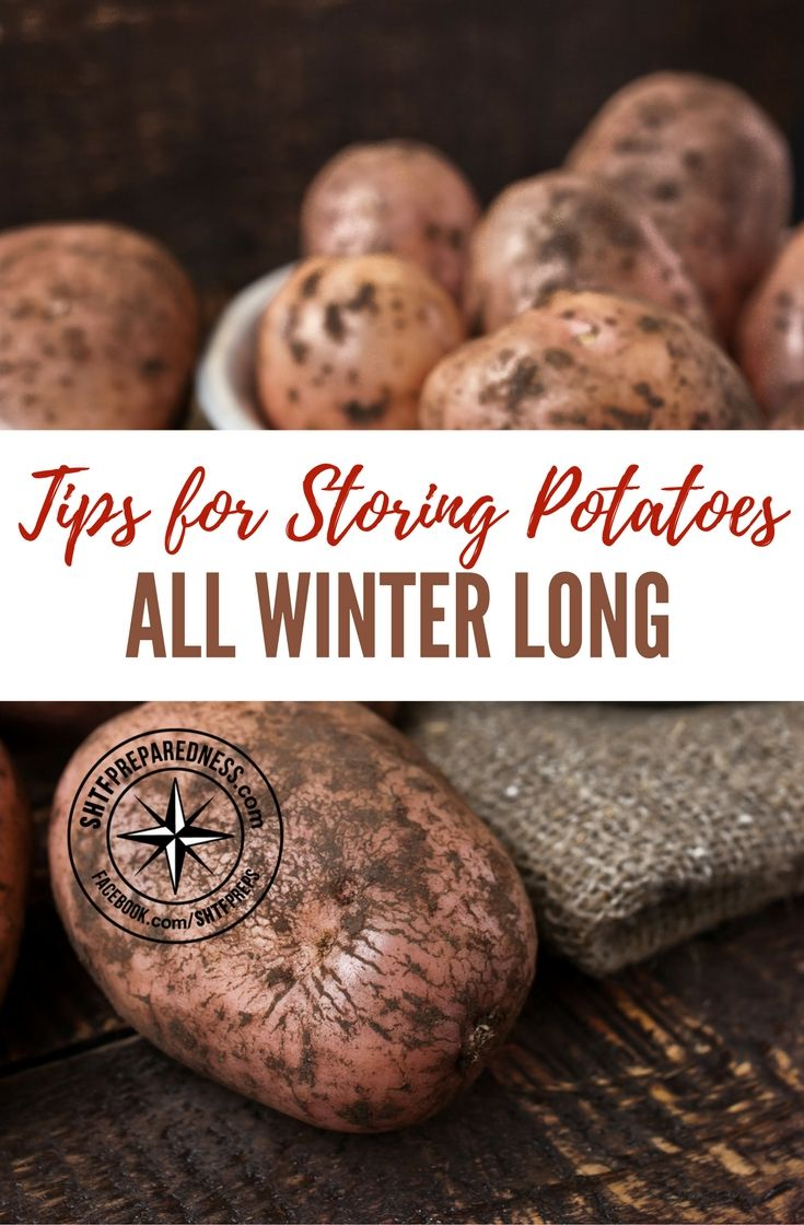 tips for storing potatoes all winter long plants winter and spaces