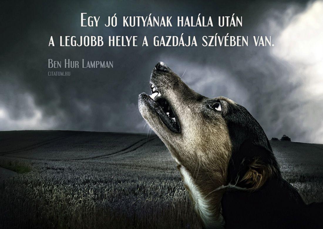 kutya szerelem idézetek Ben Hur Lampman #idézet   Kutyás idézetek, Kutya, Idézet