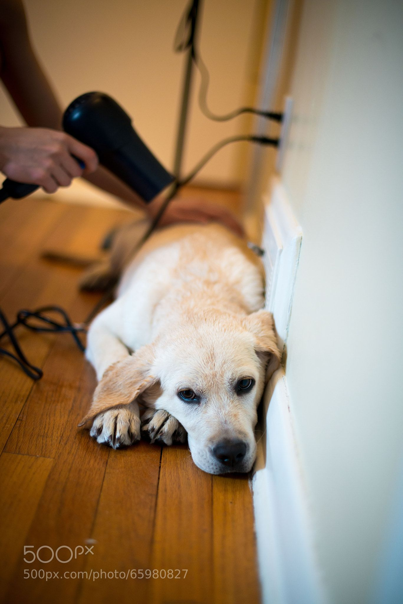 1 NYC Maid Service For 90 Dog photos, Dogs, Shower