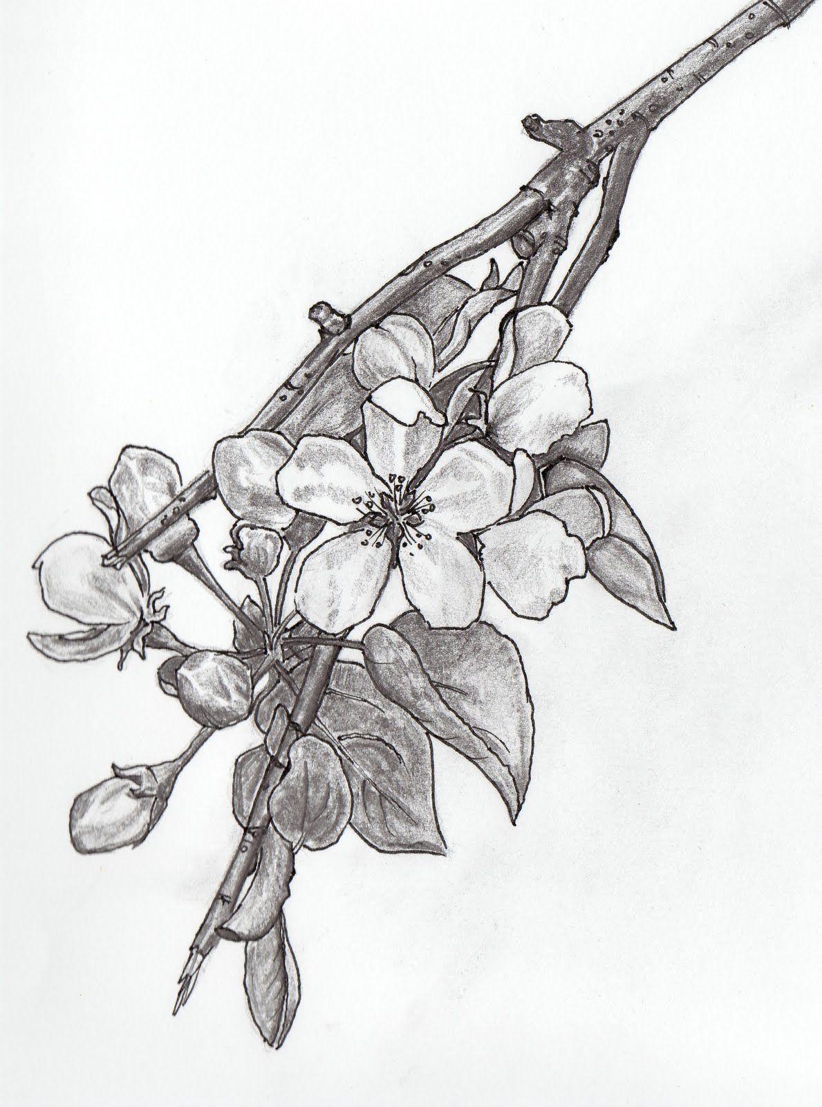 Jasmine Flower Botanical Drawing Google Search Tattoos