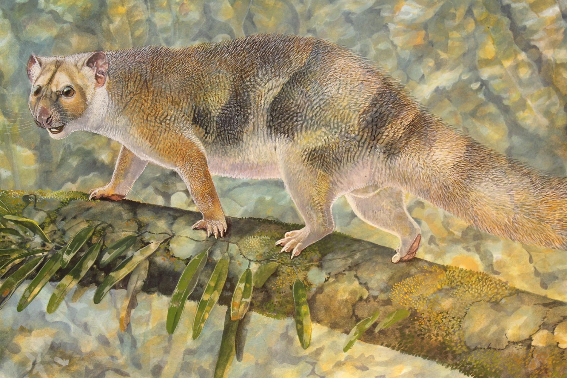 Animal News Extinct Animals Prehistoric Animals Marsupial