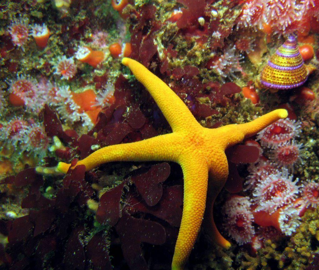 Starfish Anatomy Worksheet Panoramio