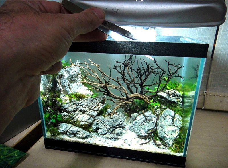 results of the minitank contest nano aquariums aquatic plant central aquarium wasser und. Black Bedroom Furniture Sets. Home Design Ideas