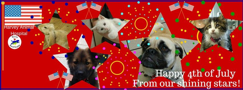 Happy 4th of July from our shining stars!