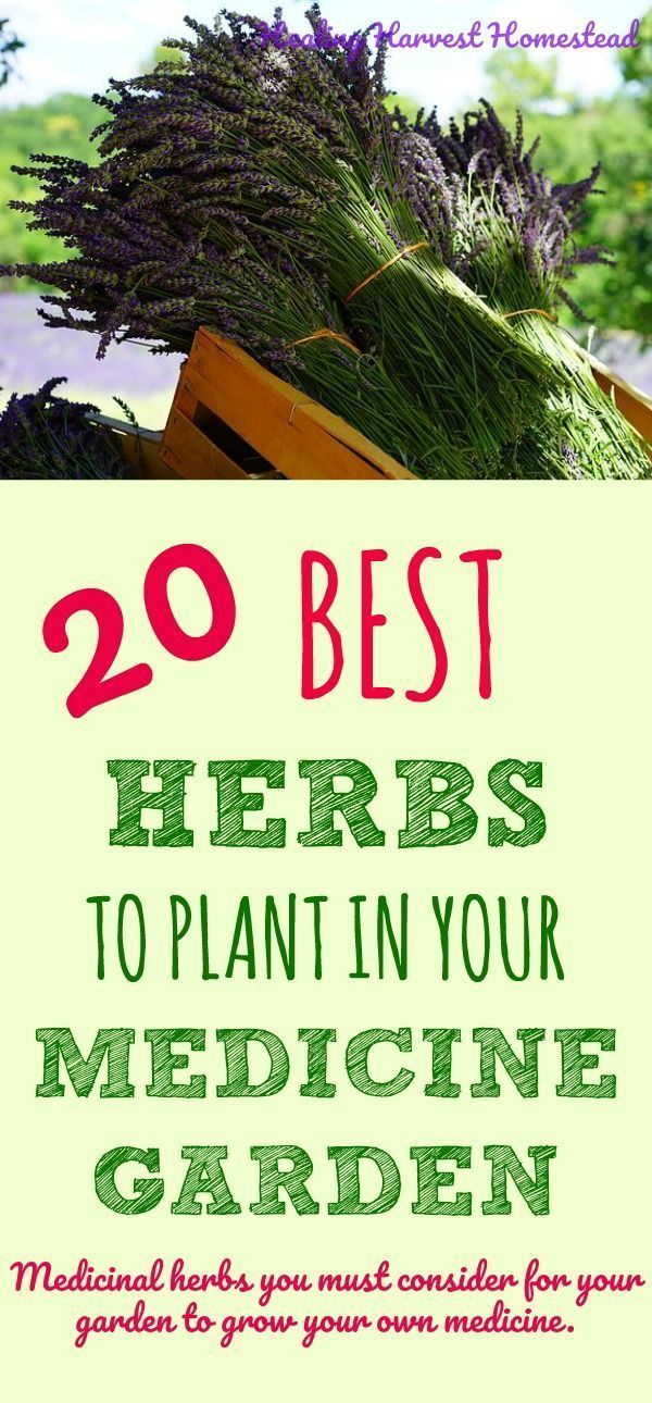 20 Medicinal Herbs to Grow in Your Healing Garden (Make Your Own Herbal Remedies with Plants You Grow!) — All Posts Healing Harvest Homestead
