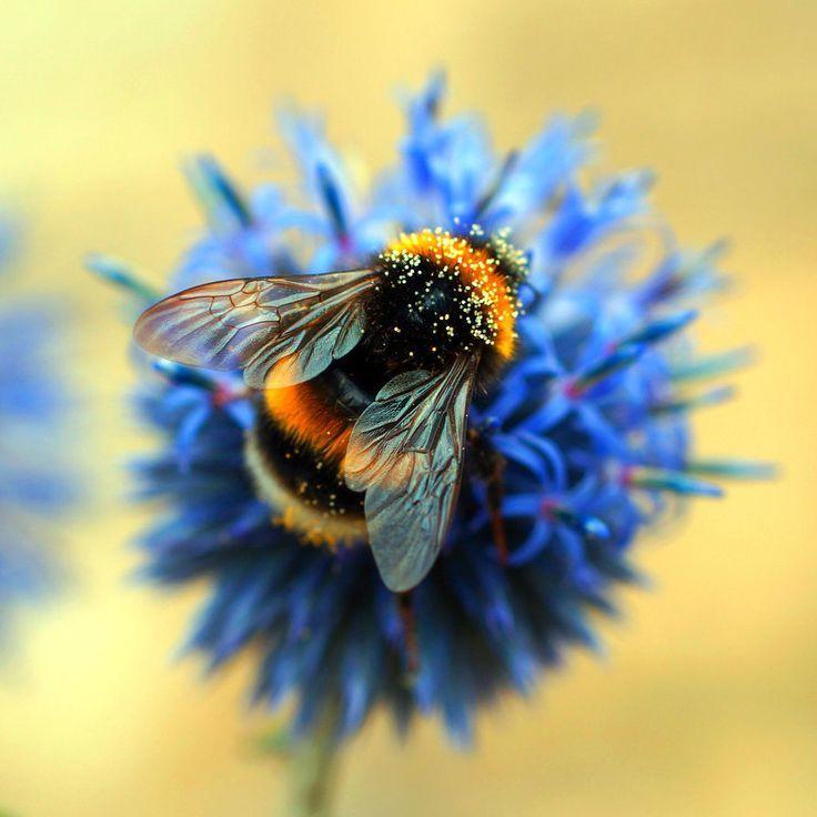 Image result for honey bee pinterest