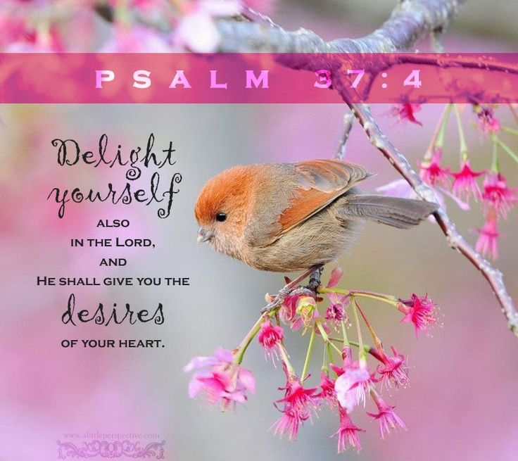 Image result for delight yourself in the lord kjv