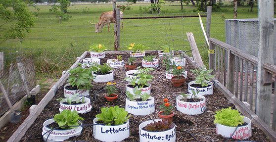 container gardening vegetables that grow in containers