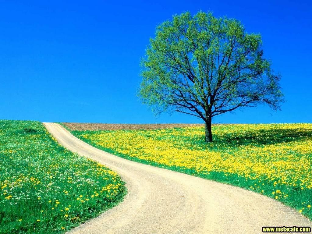 beautiful natural scenes images 6 hd wallpapers | eakai. | art's