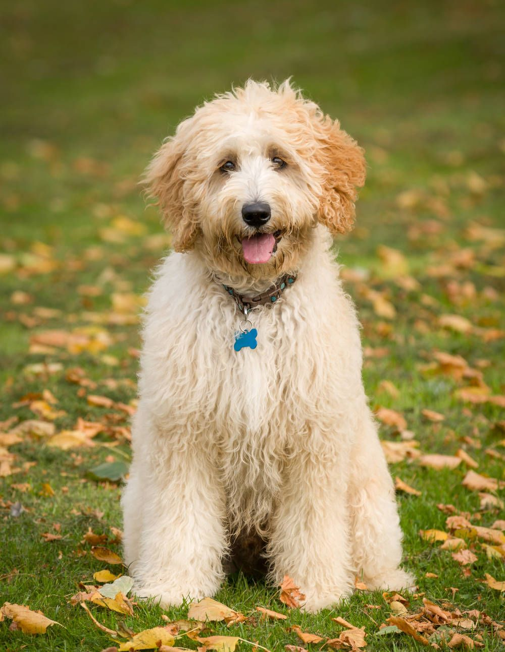 The Preppiest Dog Breeds Preppy Dog Dog Breeds Dogs