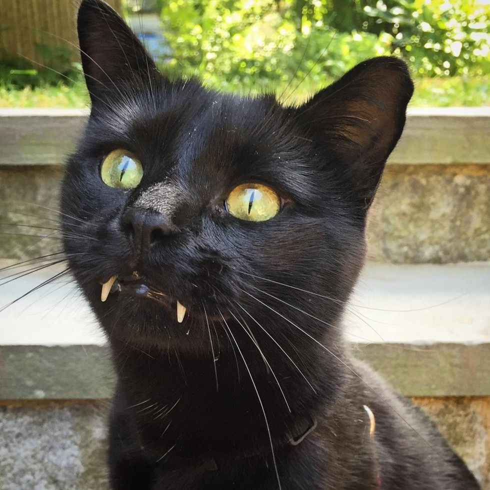Woman Saves Kitty With Vampurr Fangs From Streets One Year After The Rescue With Images Vampire Cat Pretty Cats Cats