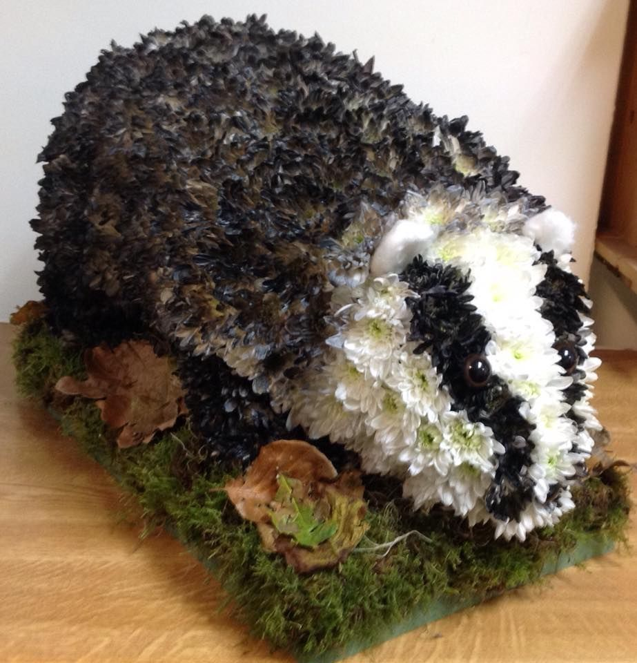 Badger created by daffodils florist exmouth flowers novelty badger created by daffodils florist exmouth izmirmasajfo Images