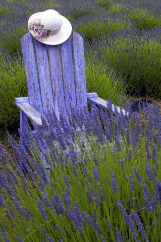 Lavender Field Lavande Jardin Bleu Lavande Et Couleur Lavande