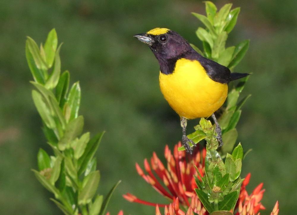 Fim Fim Bird by Nestor D. Bewiahn