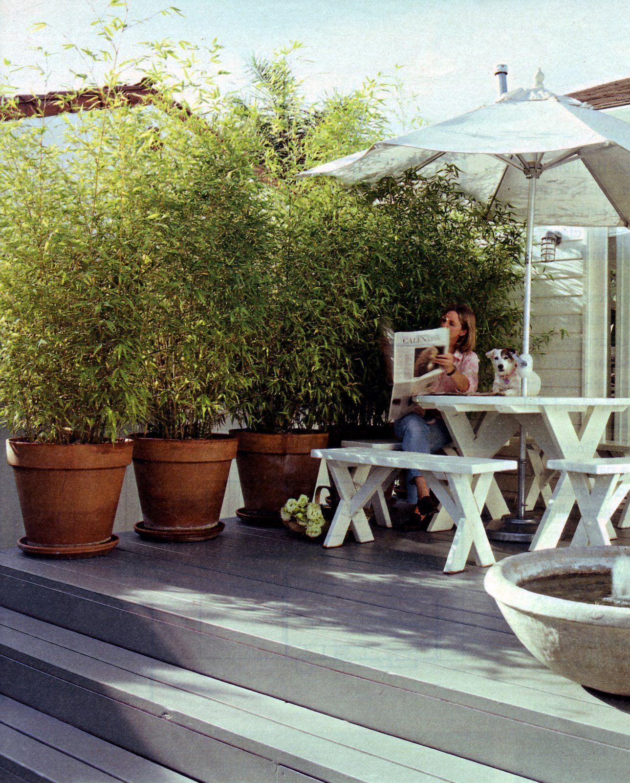 Balcony Privacy Plants Potted Privacy Plants Looks Like Bamboo Outdoor