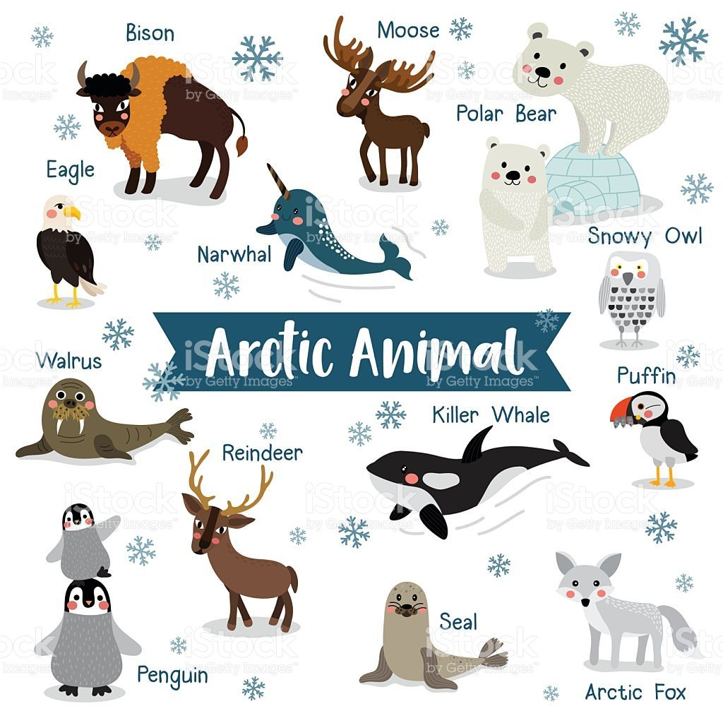 Arctic Animal Cartoon On White Background With Animal Name Penguin In