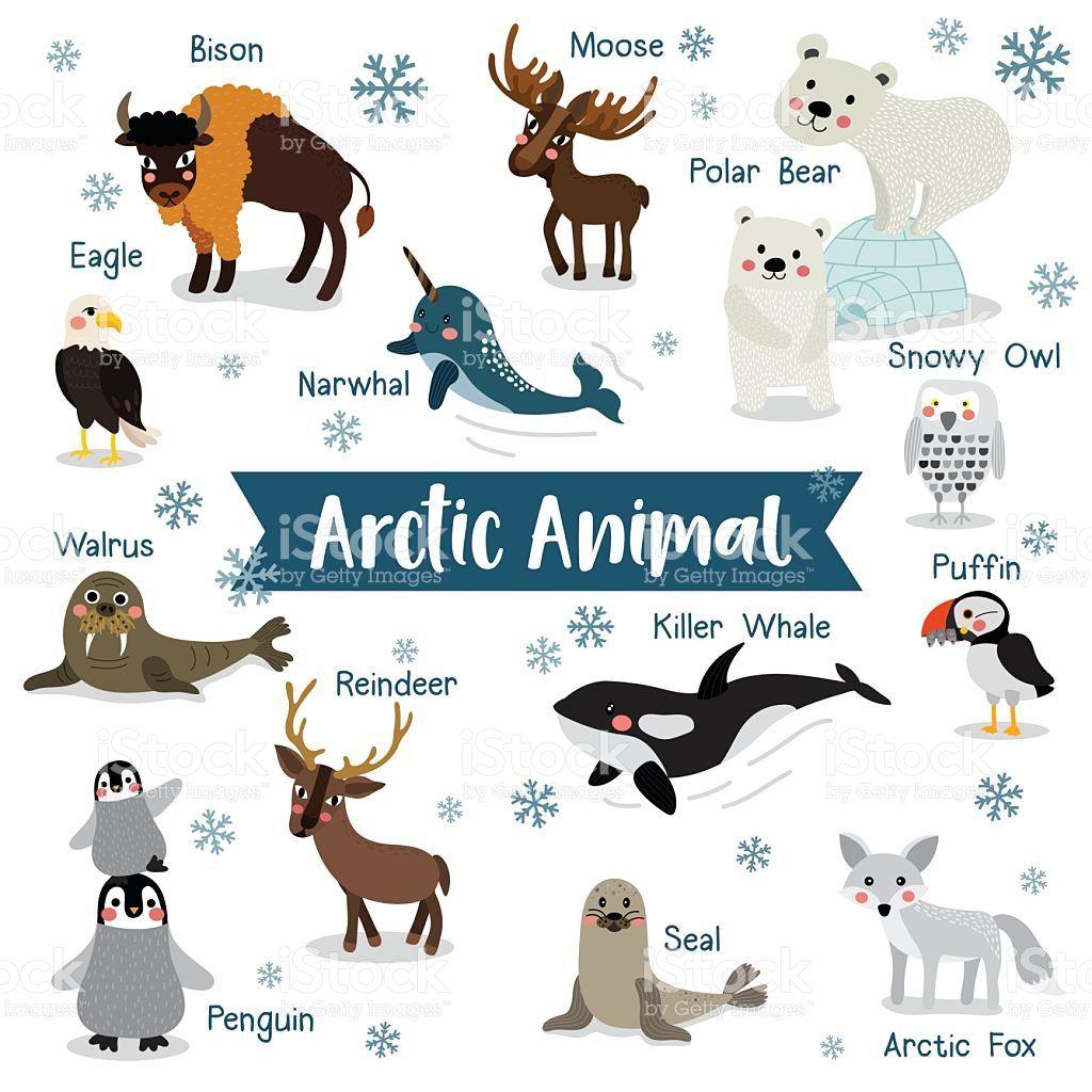 Arctic Animal Cartoon On White Background With Animal Name