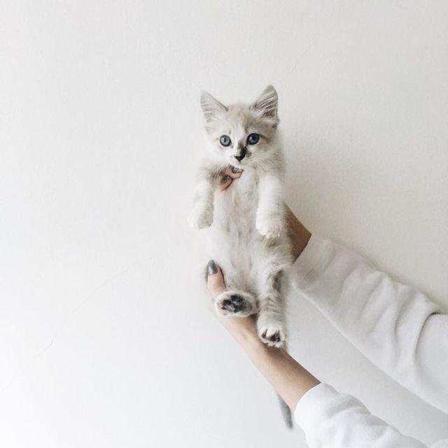Apellanddd Sopoja Elaimia Kitties Kissanpennut