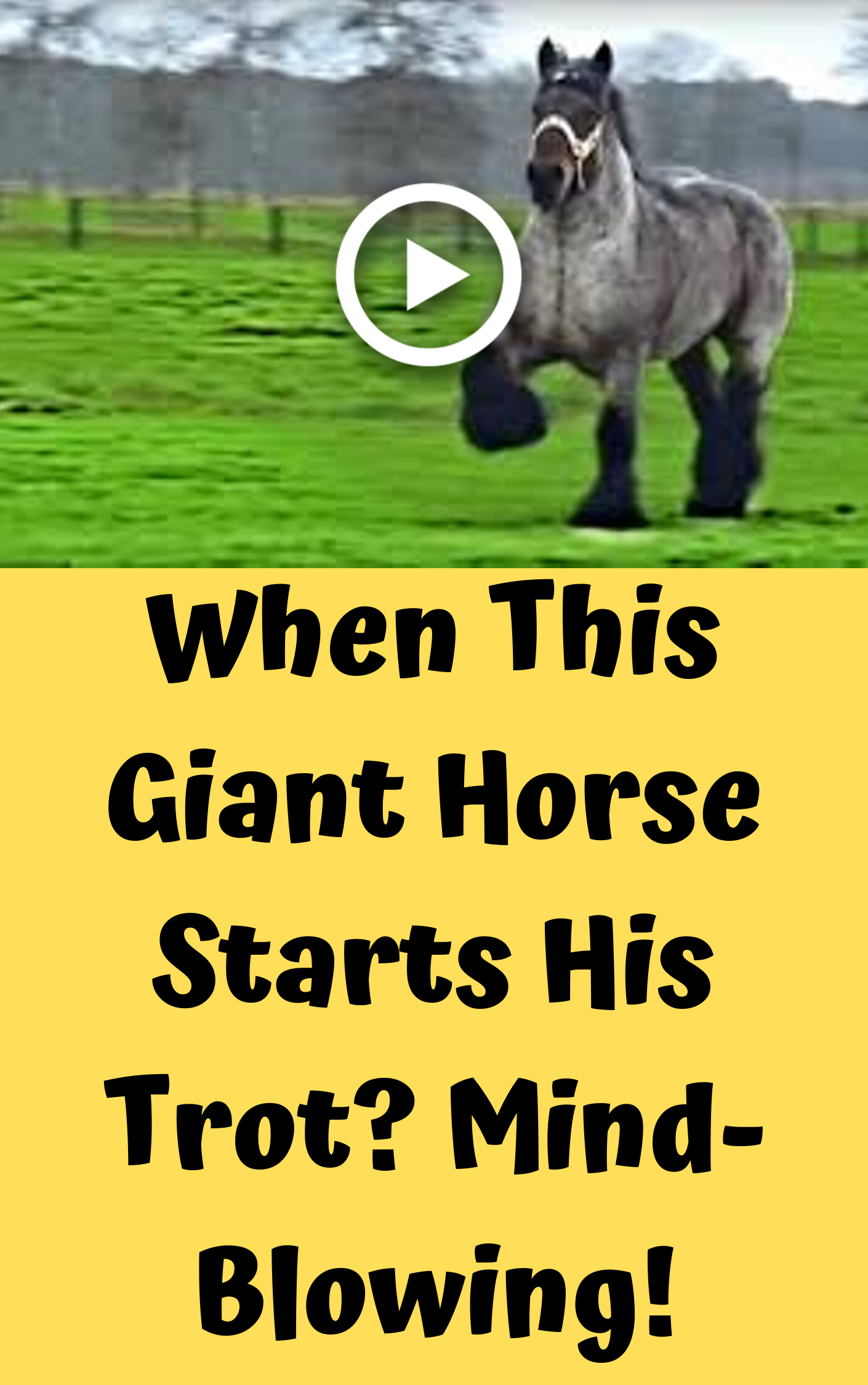 When This Giant Horse Starts His Trot Mind Blowing Horses Most Beautiful Horses Beautiful Horses