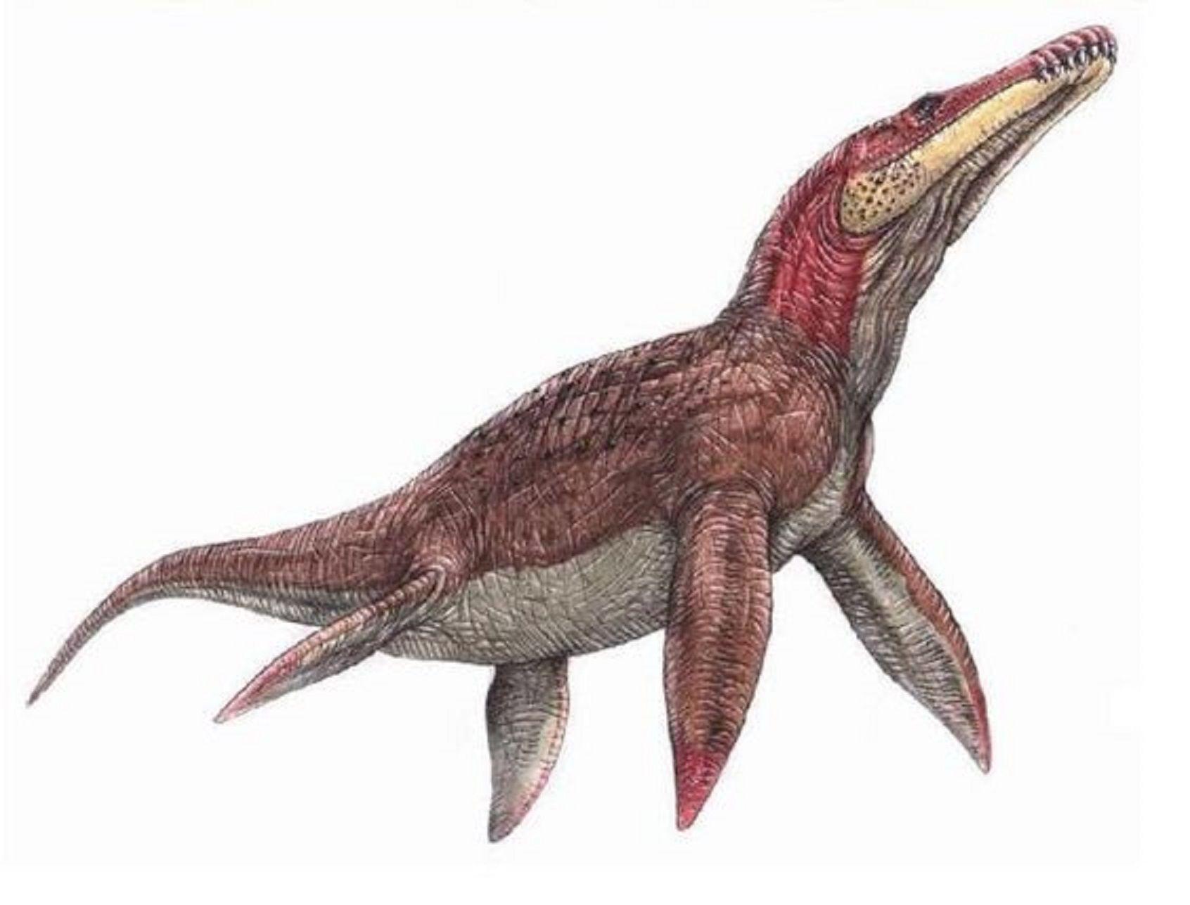 Art illustration Dinosaurs Aquatic Liopleurodon Also