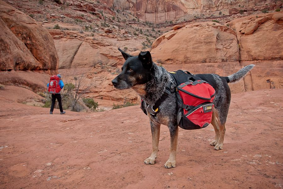 What's In Desert Dawg's Pack? World's most popular