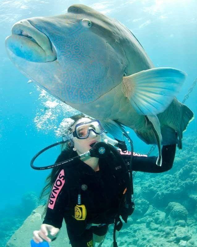 Great Barrier Reef - Australia Descubra a maravilha de mergulhar na Great Barrier Reef. Além do mergulho você também pode fazer um voo panorâmico sobre o recife. Vocé irá se impressionar com a beleza deste mar! #descobrindoavida #dive #diving #mergulho #scubadiving #scubapro #scubagirl #ocean #underthewater #padi #blogmochilando #instatravel #instagram #loucosporviagem #blogueirosdeviagens #destinosimperdiveis #destinocerto #viajenapaz #maladeviagem #vcmochilando #fantrip #viajar #travel…