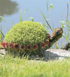 gotta love the turtle topiary