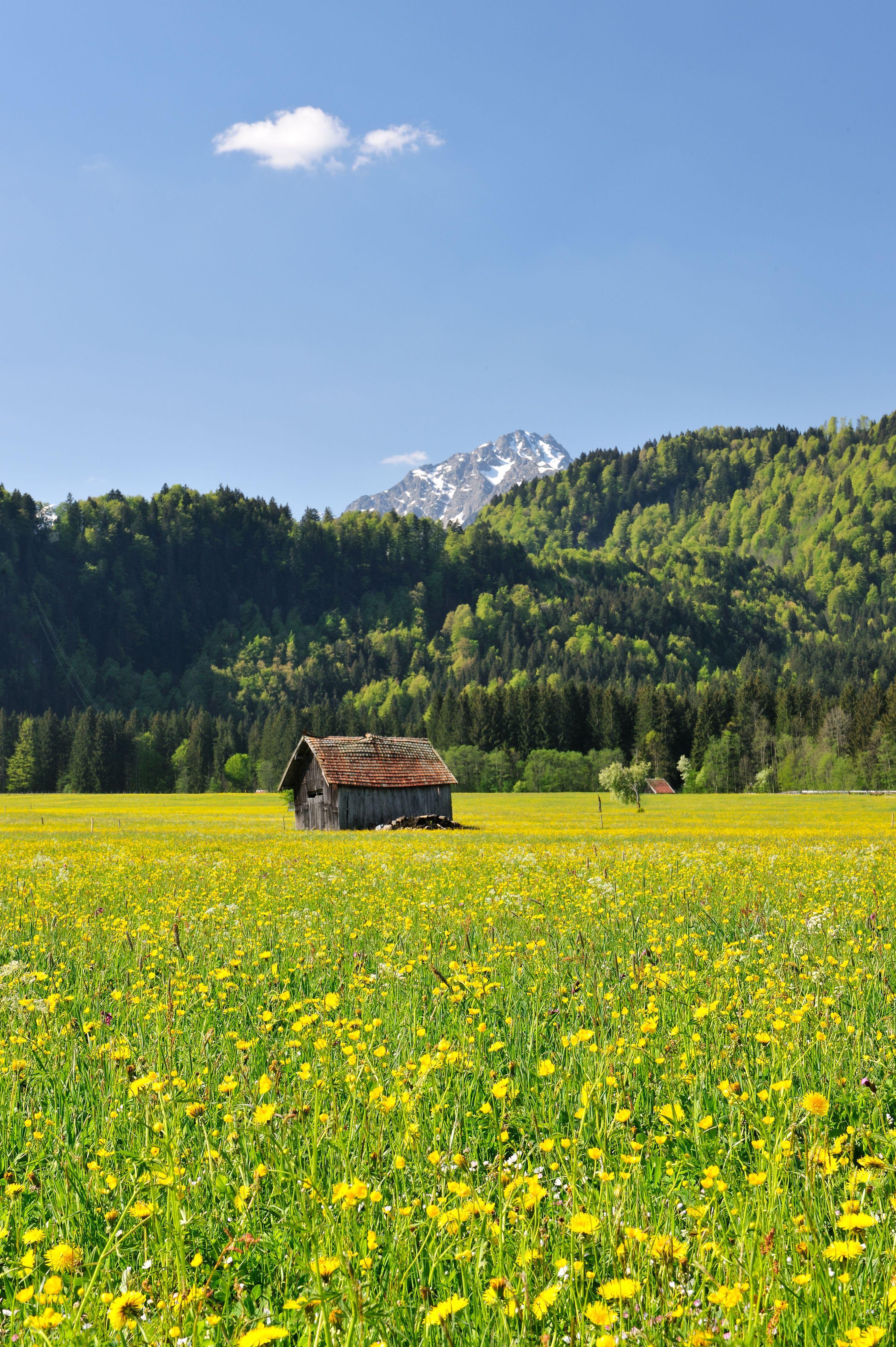 Fruhlingswiese Bei Oberstdorf Blumenwiese Urlaub Berge Deutsche Landschaft Landschaft