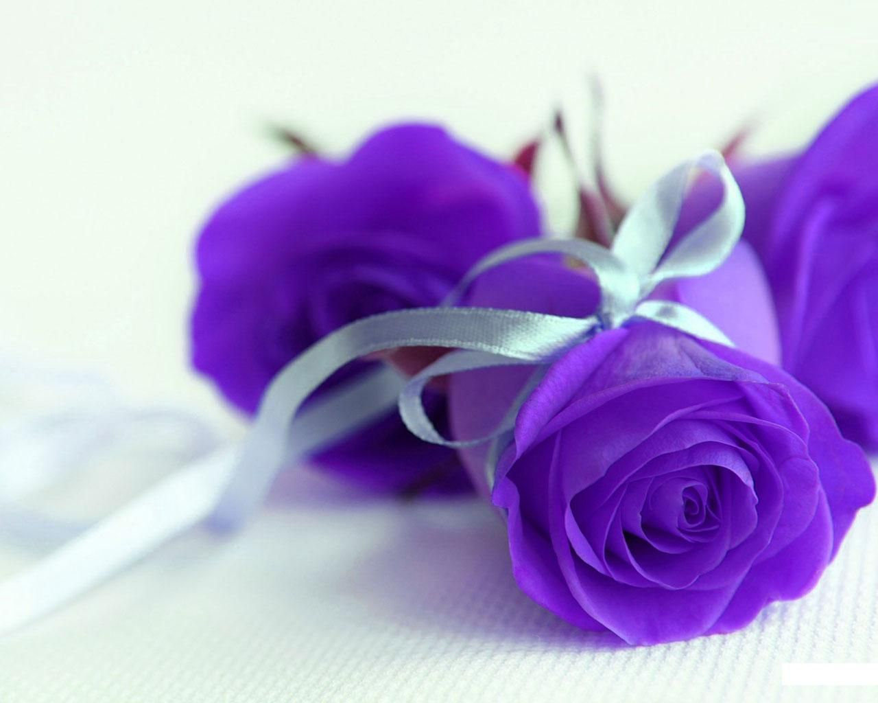 Funny Purple Flowers Hd Wallpaper: Picture Of Purple Rose 4180 Wallpapers