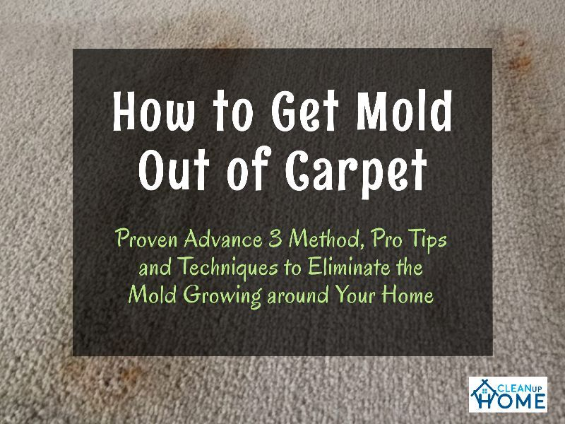 8e502fa75c639c55e5945ed84e3912ff - How To Get Rid Of Mold Out Of Carpet