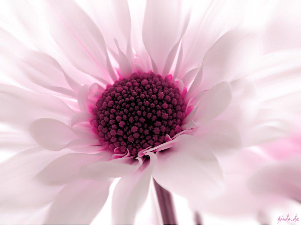 iPhone flower Wallpaper Fondos de flores, Fondos de