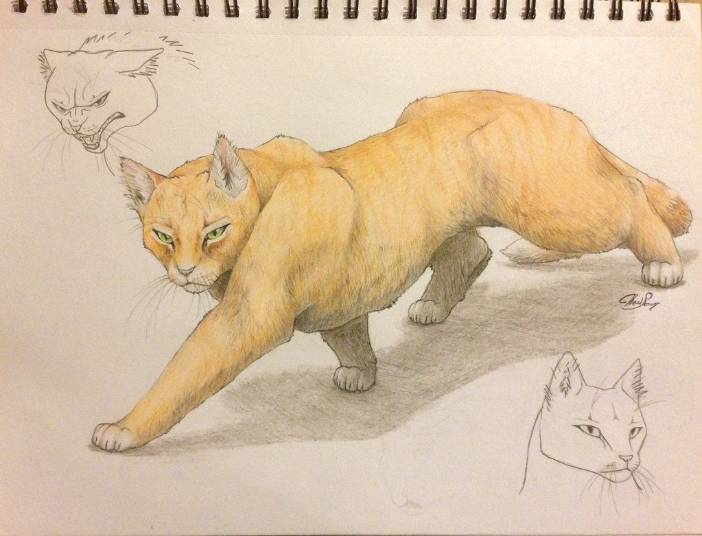 Color of cats fur - Starting My Individual Warrior Cats Tributes The First Being Fireheart Firestar Trying To Emphasize Individual Characteristics Facial Features Fur