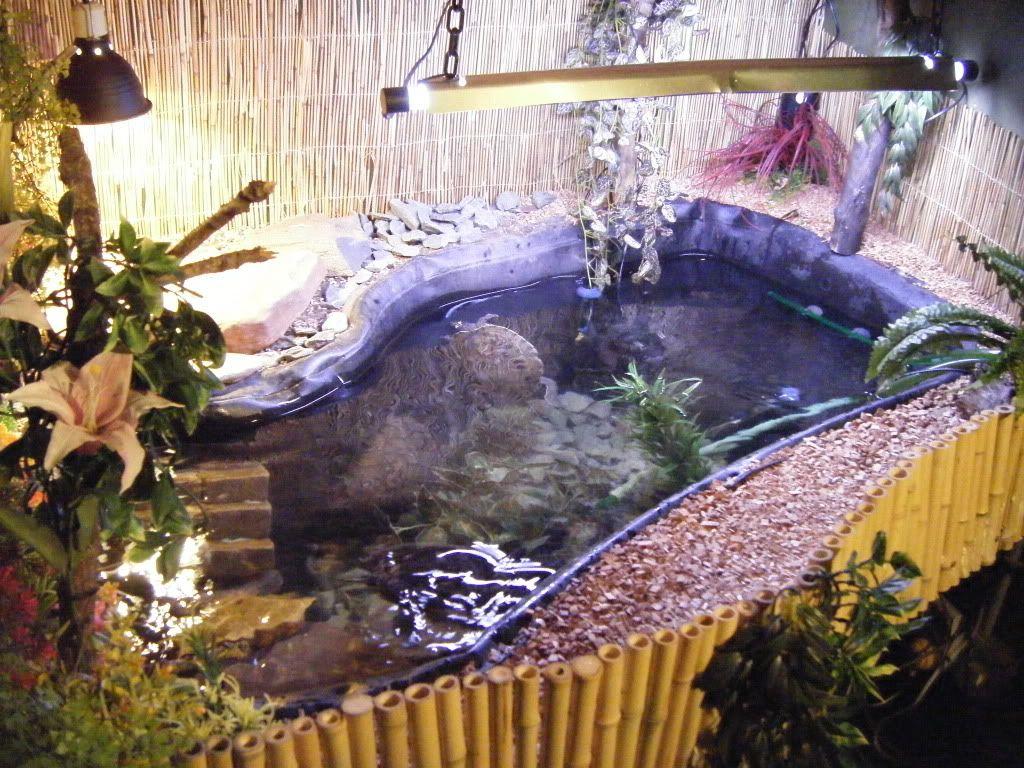 Indoor turtle pond indoor turtle pond patio jardín