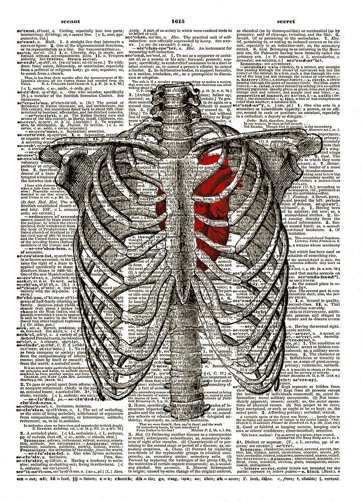 Rib Cage Diagram With Heart : diagram, heart, Human, Heart, Inside, Dictionary, Print, Print,, Anatomy