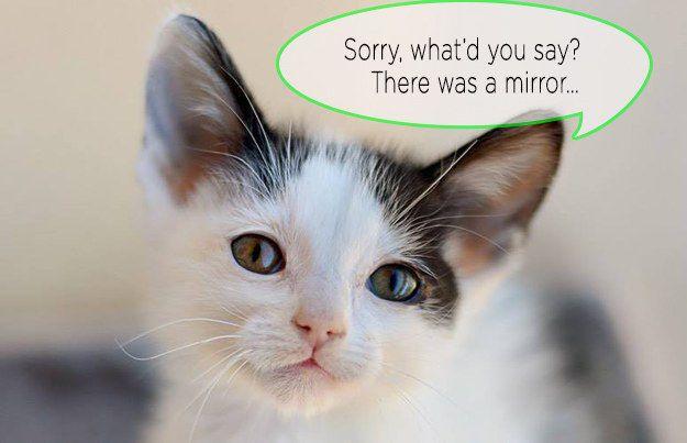 The Pretty One Animals, Kittens, Animal society