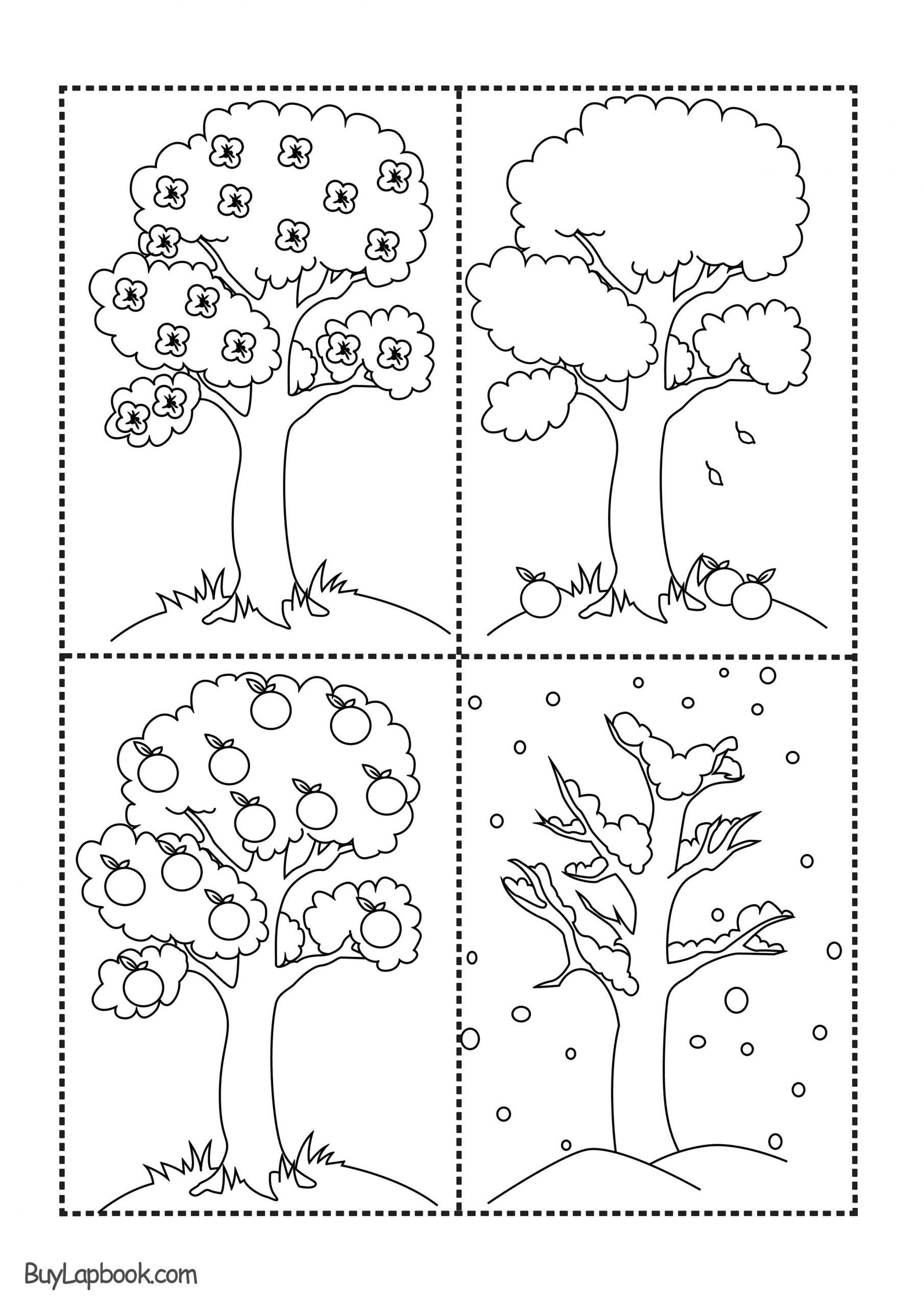 Apple Life Cycle Worksheet The Four Seasons Of The Apple