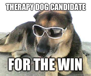 Therapy dog   German shepherd pictures, German shepherd ...