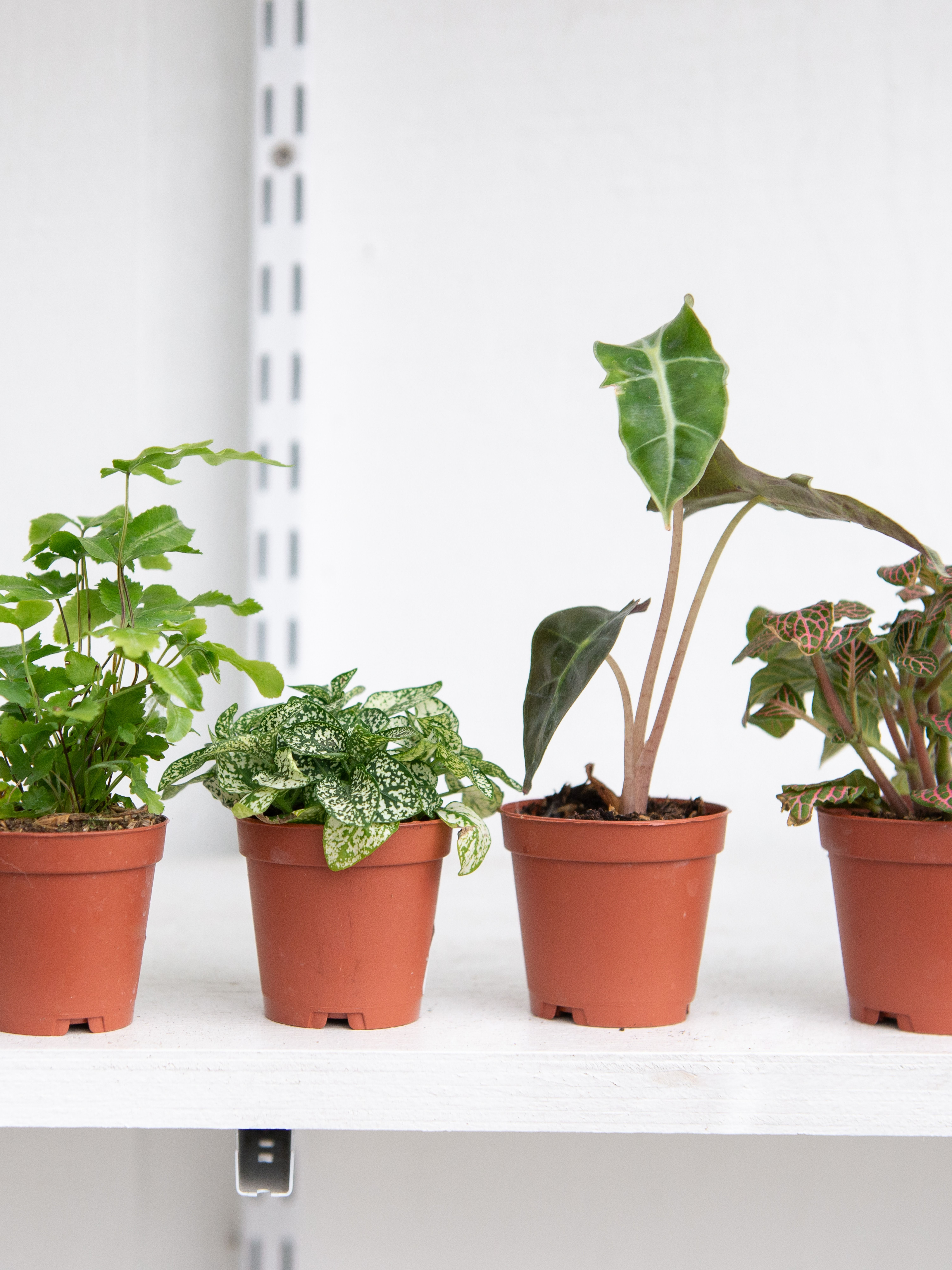 Tiny Houseplants Are Undeniably Cute