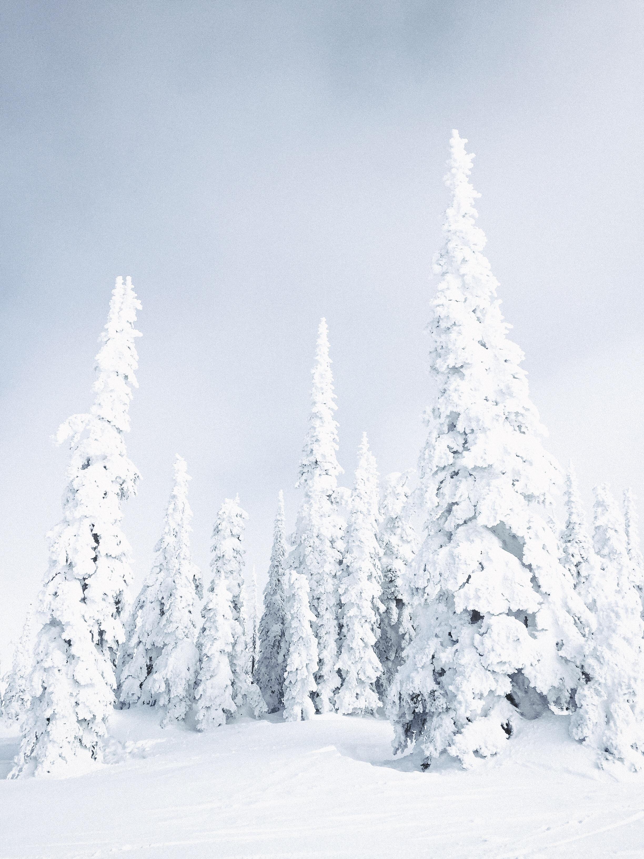 Snow Ghosts in Montana http://ift.tt/2EdZcVc   Winter and Christmas ...