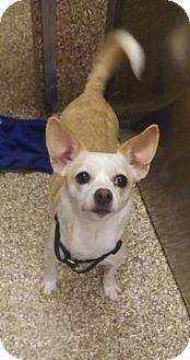 Jack Russell Terrier Puppies Dog Farrm B Virginia