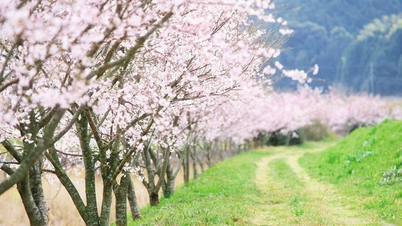 Beautiful Spring Pictures beautiful spring blossom trees | lindo lindo! | pinterest