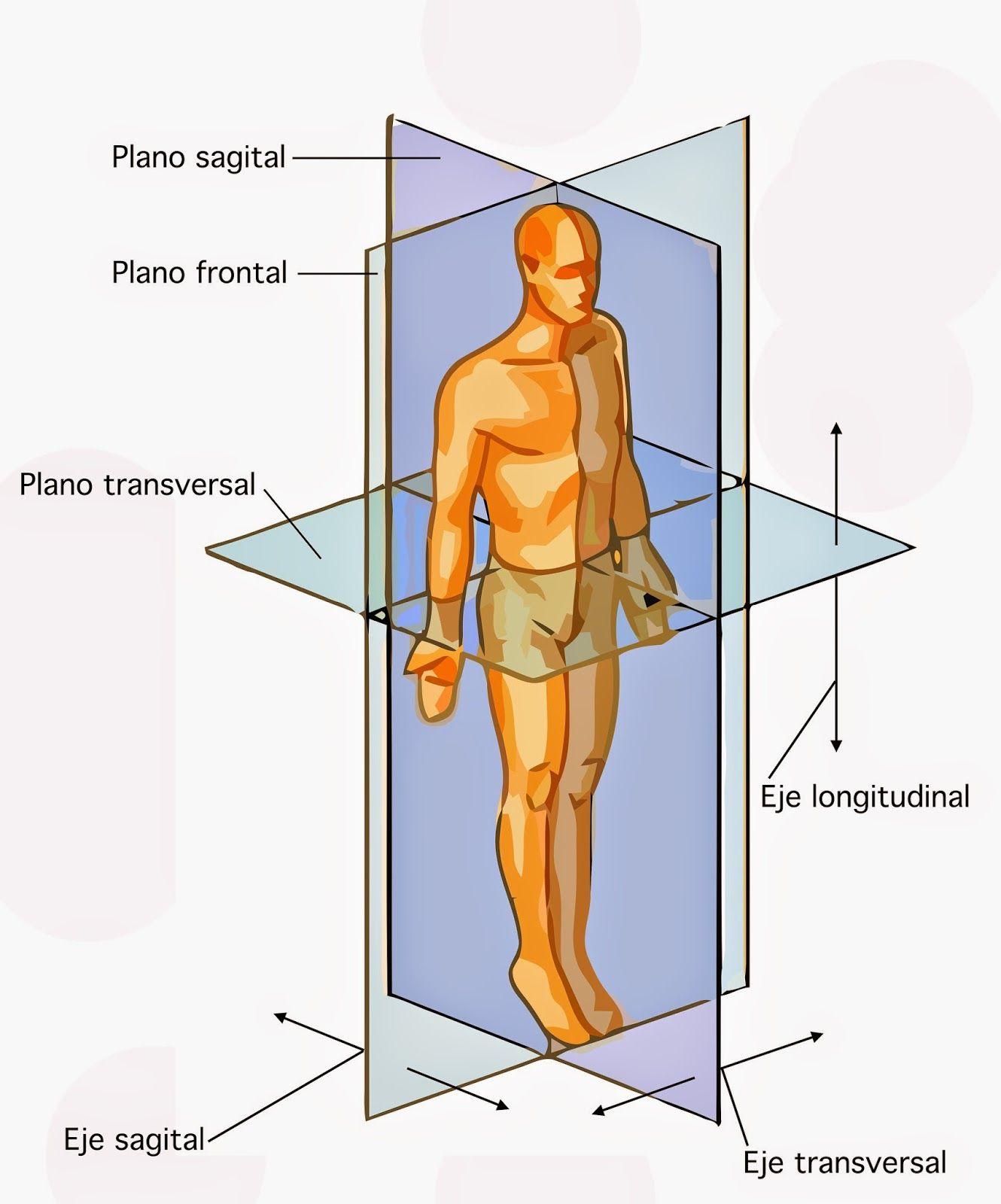 planos y ejes del cuerpo humano - Buscar con Google | auxiliar de ...