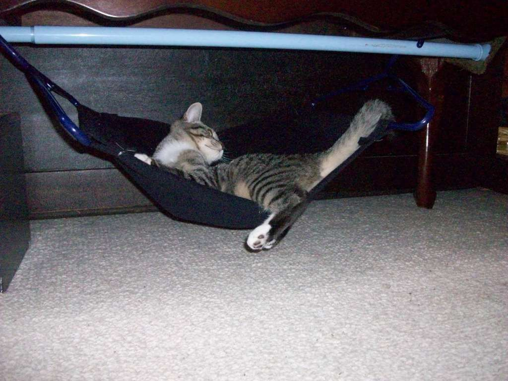 Simple Cat Hammock For The Dogs Cats Pinterest Cats Cat