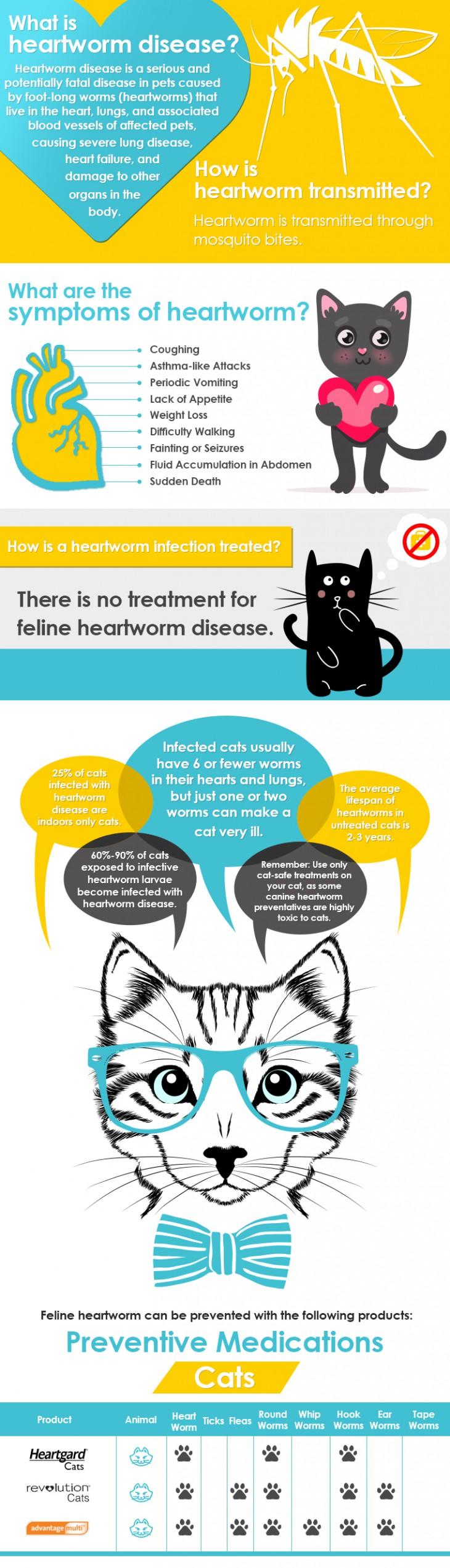 Noelito Flow Heartworm Cat Diseases Heartworm Prevention