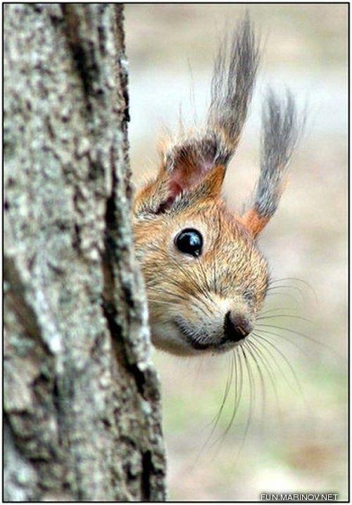 Squirrel kiss meme - photo#38