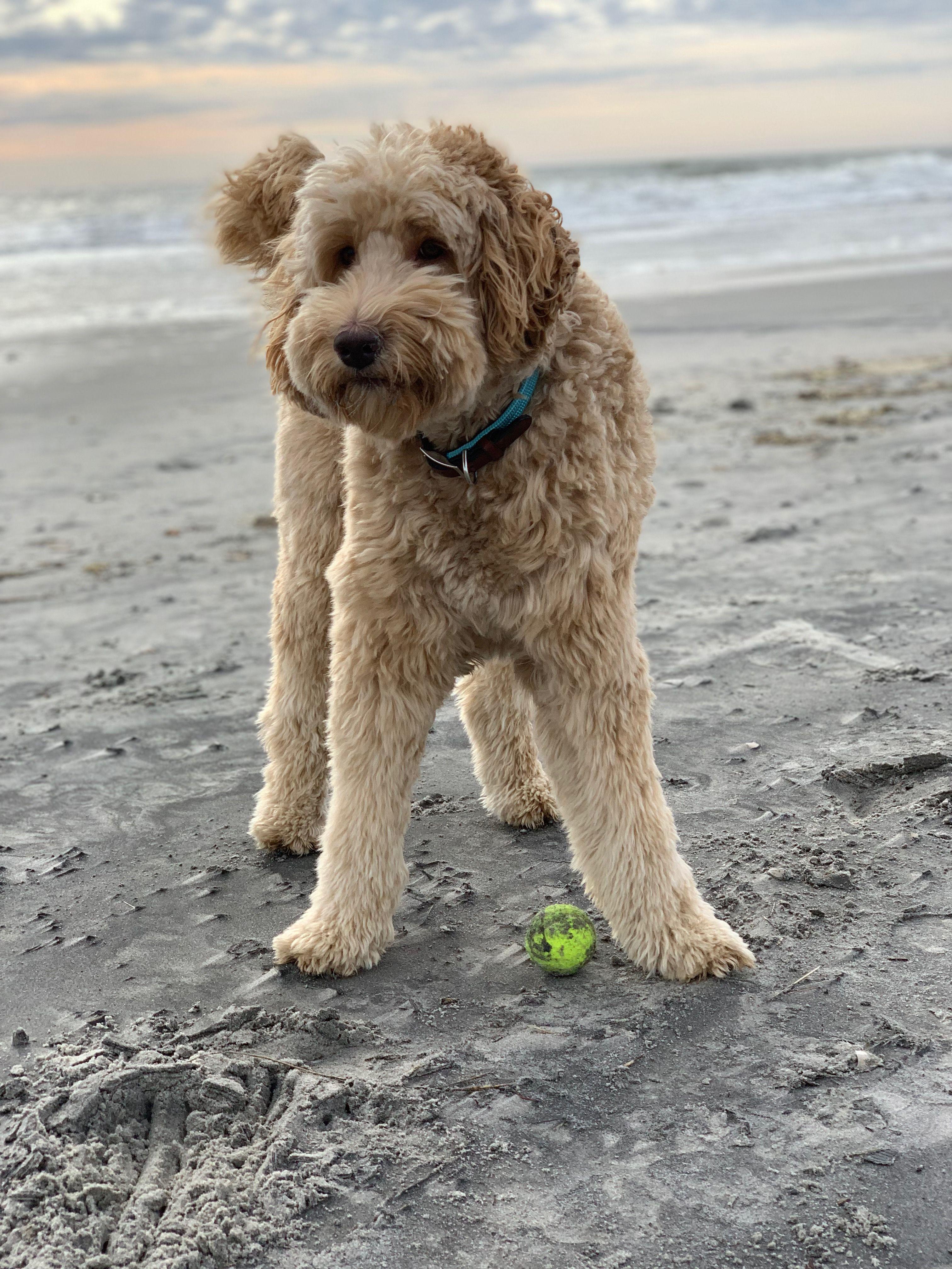 Pin On Original Coast Line Dog Leashes Collars Harnesses
