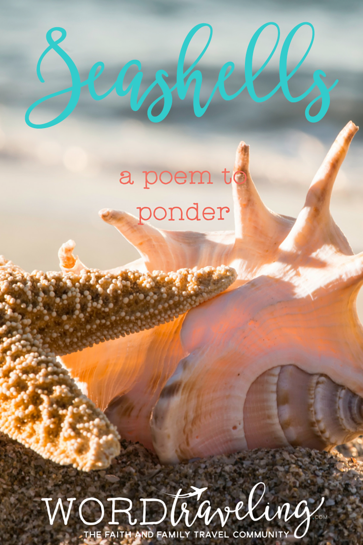 seashells a poem word traveling nationalseashellday my
