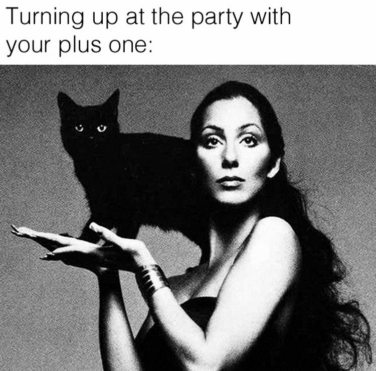 Pin by Toxic☠Glam💋 on Goth Memes National cat day, Black